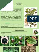 PlanteToxice_Prelegere2