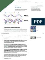 Ácidos Nucleicos - Concepto, ADN, ARN, estructura y funciones