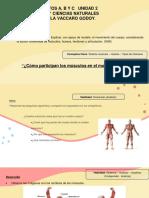 PDFAPOYOQUINTOUNIDAD2CUERPOHUMANOSEMANA1