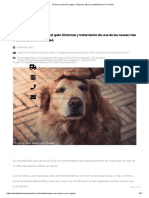 Cáncer en perros y gatos. Síntomas, tipos y tratamiento _ H.V. Puchol