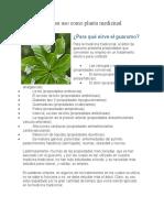 El guarumo y su uso como planta medicinal