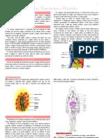 SALVA Anatomia do Coração, Vasos da Base e Pericárdio