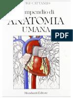 Anatomia Compendio