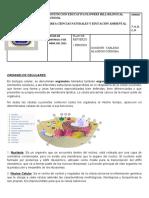 GUIA DE RECUPERACION DE 7 C.N PRIMER PERIODO