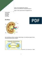Anatomie Urologie