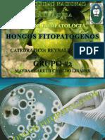 hongosfitopatogenospresen-140805193722-phpapp02