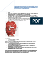 Anatomía musculos de expresion facial
