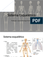Aula 2 - Sistema Esquelético - Odonto - 2021-1
