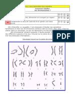 t2c09a6 - caryotype