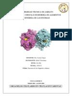 FUNCIONES DE LOS ORGANELOS CELULARES