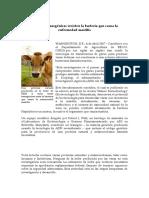 Vacas resistentes a bacterias