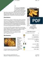 Wiki Chanterelle Mushroom
