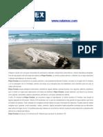 Rutamex Artículo Playa Paraiso Tabasco México Publicación 3 en Scribd