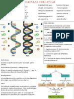 infografia de biolagia