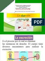 laexcrecin-130720214406-phpapp01