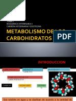 tema 2 METABOLISMO DE LOS CARBOHIDRATOS.pptx