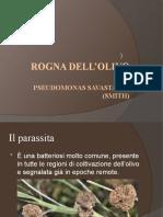 rogna-dellolivo
