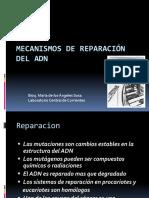 Mecanismos de Reparación del ADN Tina  11-9