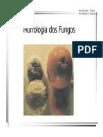MorfologiadosFungos