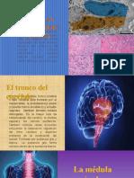Presentación1neuro