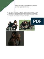 Diferencias y Similitudes Entre El Ddesarro Del Cerebro Humano y El de Los Primates