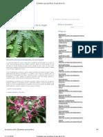 8 plantas que purifican el aire de tu hogar _ Ecoosfera
