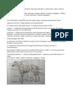 Anatomia_veterinaria
