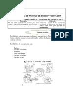 FICHAS DE CIENCI ASEO - TESOROS DEL REY