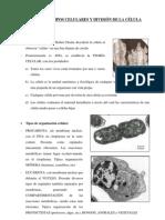 Celula Estructura y Tipos