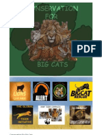 Conservation For Big Cats