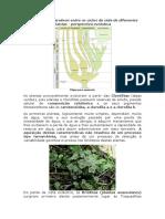 Aspectos Comparativos Entre Os Ciclos de Vida de Diferentes Plantas