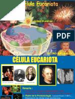 CITOLOGIA I Y II
