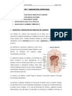 digestion_absorcion_intestinal