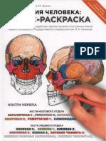 Анатомия Человека. Атлас-раскраска