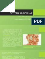 SistemaMuscular_LorenaCuervo