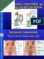 anatomia rins
