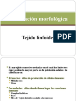 OM  DE LOS ÓRGANOS LINFOIDES