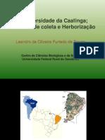 Técnicas de coleta e herborização e Caatinga