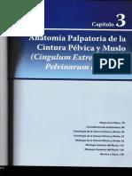 Capitulo 3, Anatomía Palpatoria de la Cintura Pélvica y Muslo
