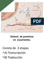 PPT._BIOLOGIA_SINTESIS_DE_PROTEINAS_01-06-2017