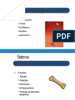 Sistema Esquelético - Considerações Iniciais-convertido