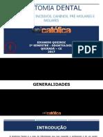 anatomiadentalcompleto-170821030325