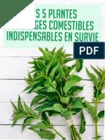 Apprendre Preparer Survivre 5 Plantes Sauvages Comestibles Indispensables en Survie