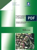 germoplasma_olivo