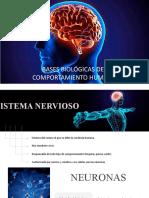Clase 9 Bases Biológicas Del Comportamiento Humano