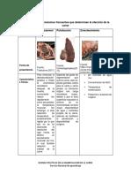 Agentes Que Contaminan La Carne Cuadro Comparativo SCRIBD