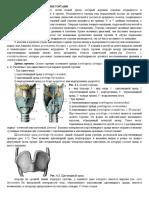 2. Клин.анатомия гортани