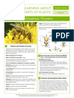 Grades 2 and Up Pollination