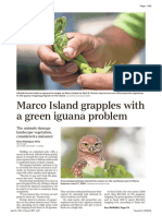Marco Island grapples with invasive green iguanas as they impact structures, wildlife - Naples Daily News 20210418_A05