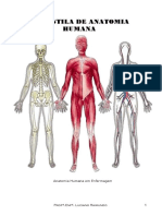 Apostila de Anatomia